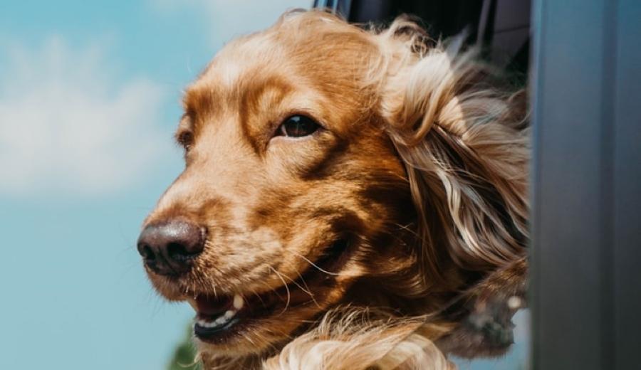 โรคยอดนิยมที่พบบ่อยในสุนัขเเต่ละสายพันธุ์