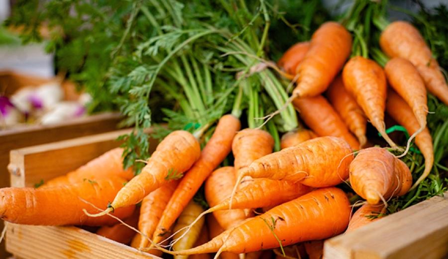 ประโยชน์ของแครอทในสุนัขและแมว