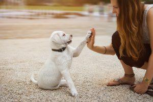 ฝึกลูกหมา