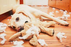 หมาชอบทำลายข้าวของ